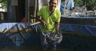 SIG Bantu Modal dan Pendampingan ke UMKM Klaster Perikanan