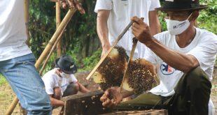 Askrindo Dukung Pemberdayaan Peternak Lebah Hutan Alam Roban